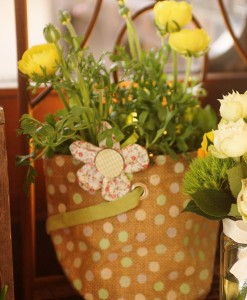 Gift Occasion - Ranunculus Plant