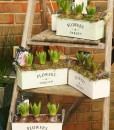 Gift Occasion - Springtime Hyacinth Planter