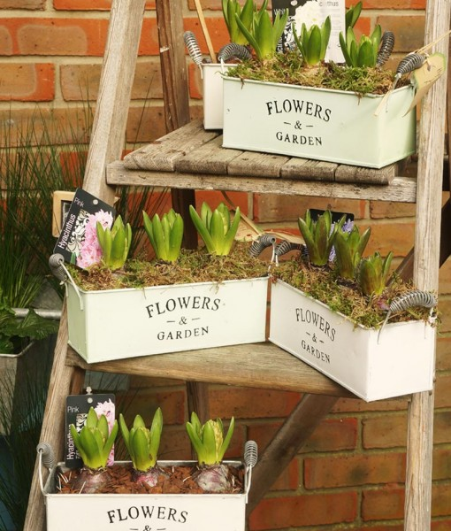 Gift Occasion – Springtime Hyacinth Planter