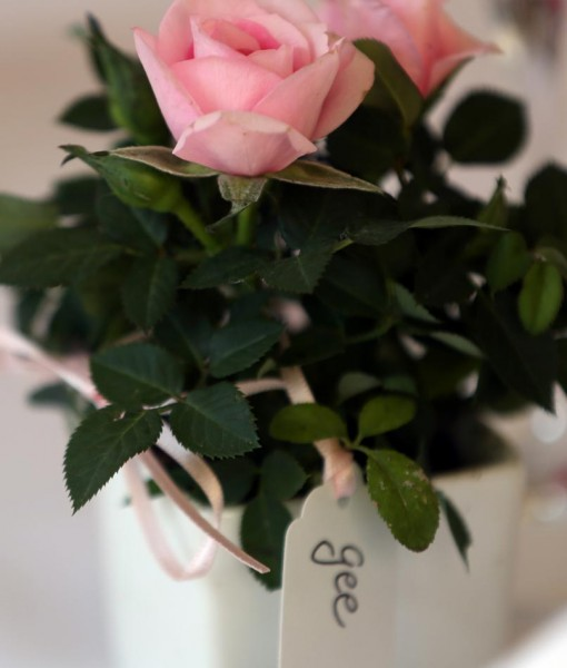 Gift Occasion – Mini Rose