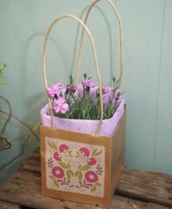 Lilac Dianthus