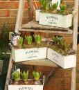 Gift Occasion - Springtime Hyacinth Planter