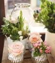 Gift Occasion - Springtime Planted Arrangements