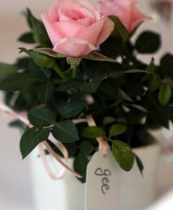Gift Occasion - Mini Rose