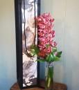 valentines-day-secret-admirer-orchid