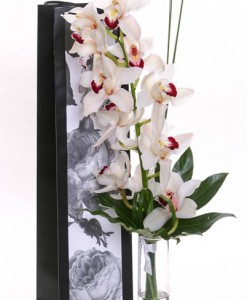 One True Love Orchid
